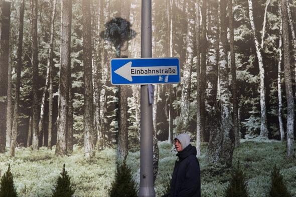 Im Märchenwald - Photo Didier Laget